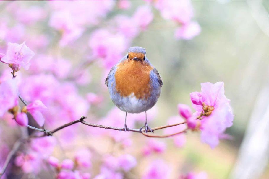 spring bird in chitwan national park