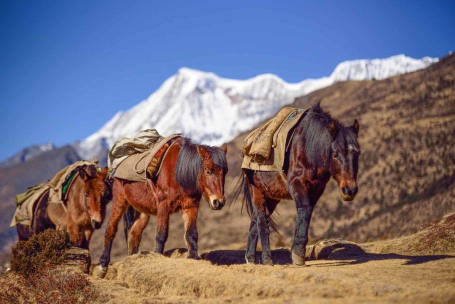 horse ride in bhutan