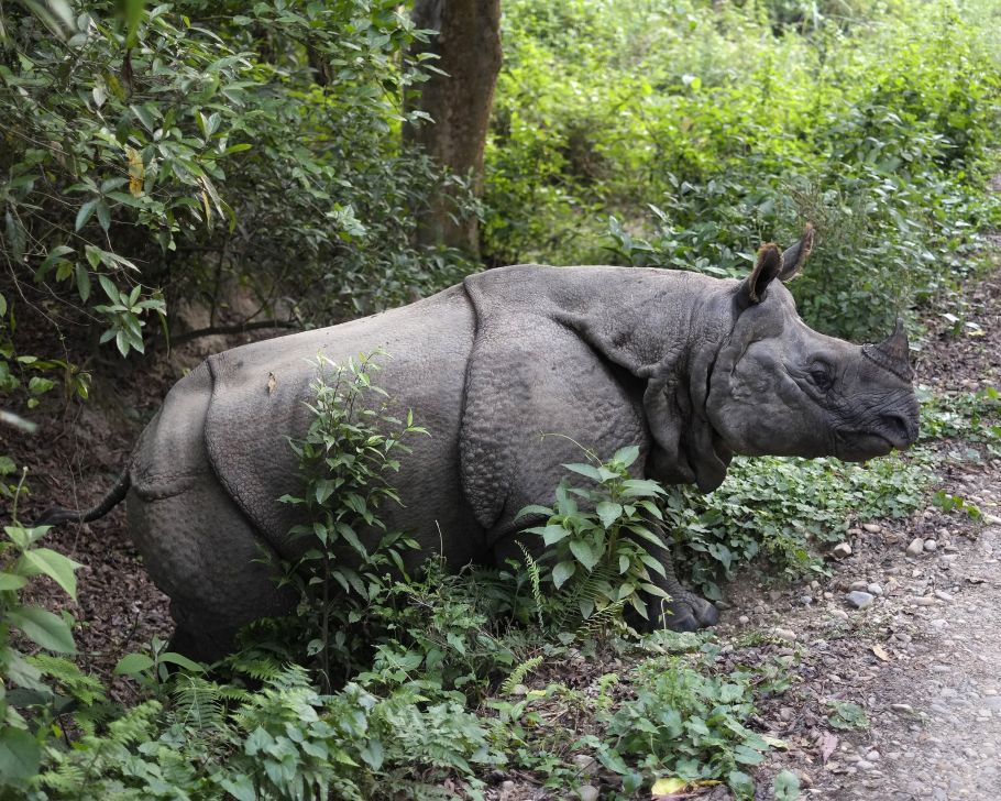 A glimpse of Chitwan National Park.
