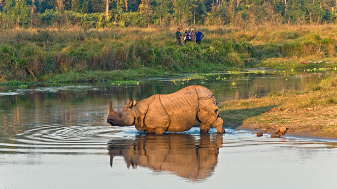 One-horned-rhinoceros-in-Chitwan-National-Park-Nepal