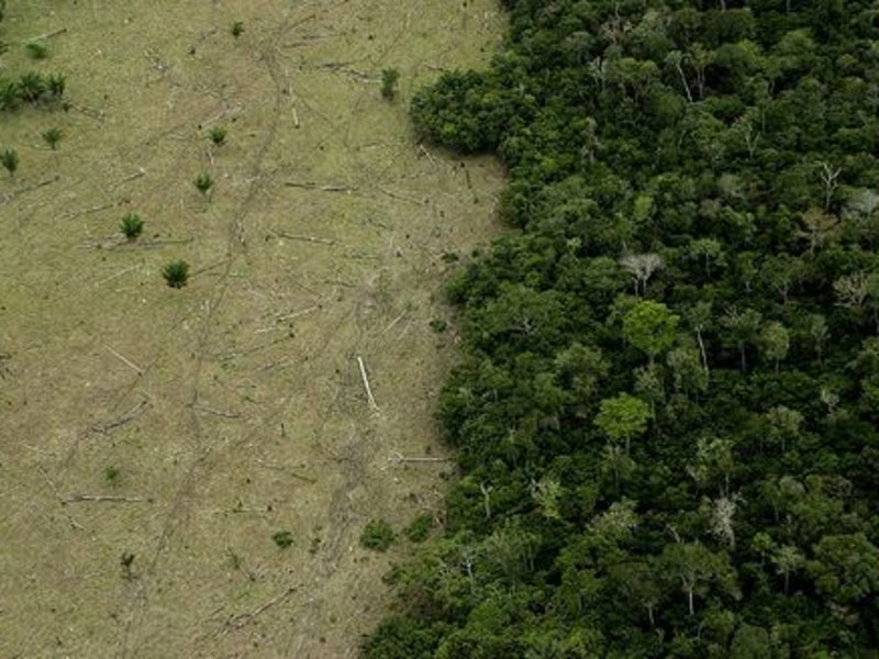 Deforestation in Haiti: What's the problem?