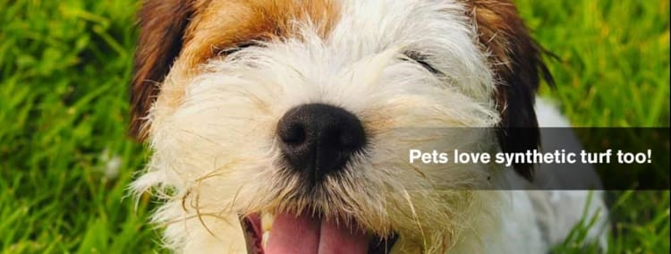 Pets love synthetic grass!