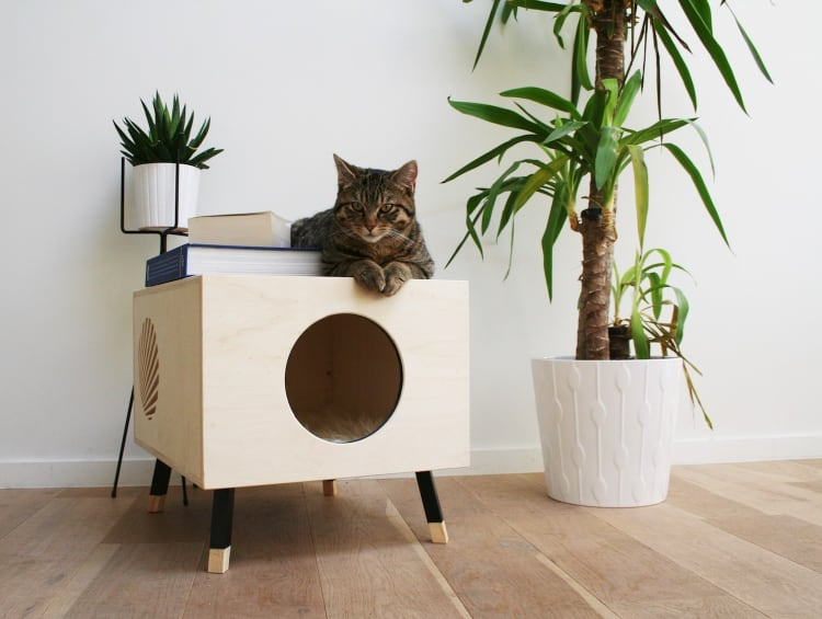 Cat Coffee Table a coffee table designed for you and your cat