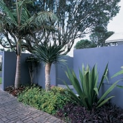 Grey coloured wall with trees and garden in agave, arecales, grass, landscaping, palm tree, plant, property, real estate, tree, walkway, yard, black
