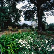 The view of a country homestead overlooking part botanical garden, estate, flora, flower, garden, grass, house, landscape, landscaping, plant, plantation, shrub, spring, tree, vegetation, yard, black, green