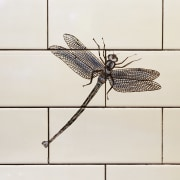 The detail of a painted dragonfly - The arthropod, insect, invertebrate, white