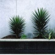 Exterior view of planter garden and rock speaker agave, arecales, flowerpot, grass, houseplant, palm tree, plant, tree, white, black