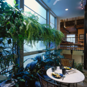View of the indoor garden room, many palnts, home, interior design, plant, tree, window, black
