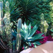 view  of the cacti, agave plants and agave, agave azul, aloe, arecales, flora, leaf, plant, tree, vegetation, teal, black