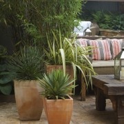 View of a small shaded garden which features agave, arecales, flowerpot, houseplant, palm tree, plant, brown