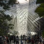 At the heart of Jewel, visitors take in architecture, botany, landmark, light, palm tree, plant, tree, world, black, gray