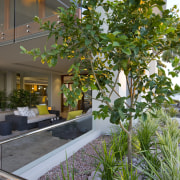 View of deck area and landscaping in contemporary arecales, flora, home, plant, real estate, tree, gray, brown