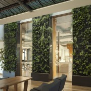 A living wall in the centre of the interior design, window, black