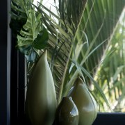 Black window and door trim in the kitchen arecales, flowerpot, leaf, palm tree, plant, still life photography, green, black