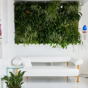 The green wall is fed by an automatic flowerpot, interior design, plant, wall, white