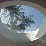 A large oculus in the roof of the architecture, arecales, ceiling, circle, palm tree, tree, gray