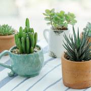 Cactus - Instagram's most popular houseplants revealed! -