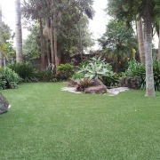 Need to know how to care for your arecales, backyard, estate, garden, grass, grass family, landscape, landscaping, lawn, palm tree, plant, property, real estate, shrub, tree, vegetation, yard, green, gray