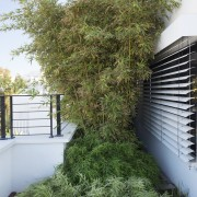 The bamboo is a good choice for this evergreen, grass, house, plant, shrub, tree, green, brown