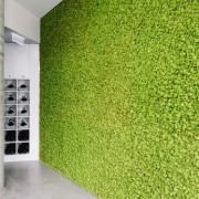 The green wall helps to balance out the grass, green, plant, wall, green