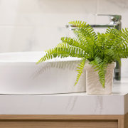Ferns - Instagram's most popular houseplants revealed! -