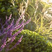 Garden Project By Landart Landscapes Photo. Photography: Jason flora, flower, plant, purple, shrub, vegetation, brown