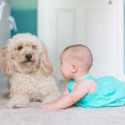 Underfloor heating - child | companion dog | child, companion dog, dog, dog breed, dog like mammal, puppy, snout, toddler, white, gray