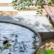 A view of the water feature outside bird, fish pond, pond, reflection, water, water resources, white