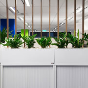 Greenery is an important addition to any modern plant, gray