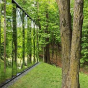 Reflecting nature biome, ecosystem, forest, grass, grove, nature reserve, path, plant, tree, trunk, wood, woodland, green, brown