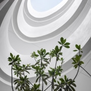 This open courtyard is like a set from flora, leaf, plant, white, gray