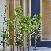 Architect: Irons McDuff ArchitecturePhotography by Nikole Ramsay flower, flowerpot, houseplant, plant, tree, gray