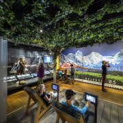The new permanent exhibition at the Museum of leisure, plant, tourist attraction, tree, brown, black
