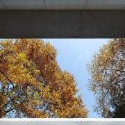 Looking up and out to the forest architecture, autumn, house, leaf, sky, tree, wall, window, yellow, black