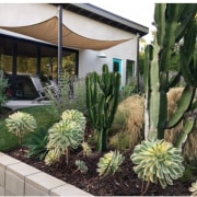Cacti are typical of the local environment agave, cactus, landscaping, plant, real estate, green