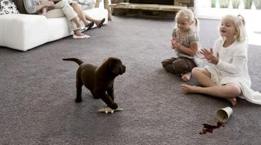 Easy to clean, grey carpeting your living room. dog, dog breed, dog breed group, dog like mammal, floor, flooring, mammal, vertebrate, gray, white