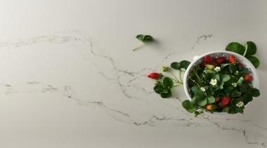 Caesarstone's interpretation of Statuario marble; Statuario Nuvo brings flower, leaf, plant, product design, still life photography, gray
