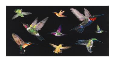 Jewel-like iridescent hummingbirds are hand woven in silk beak, bird, fauna, feather, hummingbird, organism, pollinator, wing, black, white