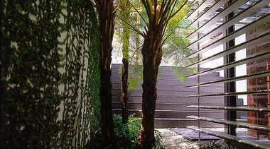 Narrow garden path between plant covered wall and architecture, biome, grass, house, leaf, plant, sunlight, tree, walkway, wall, black