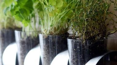 Vertical Garden - Vertical Garden - centrepiece | centrepiece, flowerpot, herb, plant, vase, white