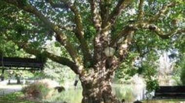 At Ellerslie International Flower Show - At Ellerslie branch, oak, plant, tree, woody plant, green
