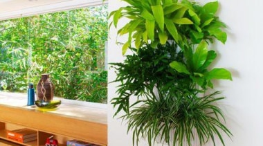 Living Wall - Vertical Garden - arecales | arecales, flowerpot, grass, houseplant, interior design, palm tree, plant, tree, white