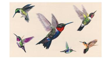 Jewel-like iridescent hummingbirds are hand woven in silk beak, bird, fauna, feather, hummingbird, pollinator, wing, white
