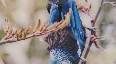 20141218094746.jpg - 20141218094746.jpg - beak   bird   beak, bird, gray