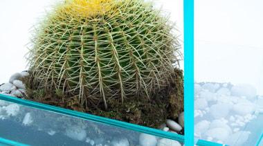 Industrial designer Vedat Ulgen, of New York company cactus, flowering plant, flowerpot, majorelle blue, organism, plant, white, teal