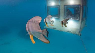 1310071403375531.jpg - 1310071403375531.jpg - fish | marine biology fish, marine biology, organism, underwater, water, teal