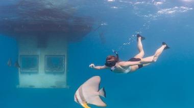 1310071408055578.jpg - 1310071408055578.jpg - diving | leisure | diving, leisure, ocean, recreation, sea, sky, snorkeling, swimming, underwater, water, teal