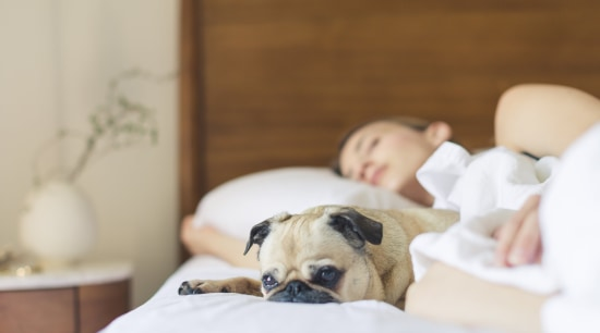 Ensure your bedroom has a cosy feel so canidae, carnivore, child, companion dog, dog, dog breed, fawn, nap, non-sporting group, puppy, puppy love, snout, gray, brown