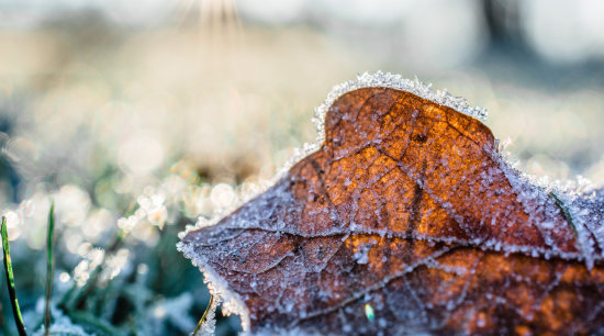 How do you manage your garden in winter? autumn, branch, close-up, freezing, frost, grass, ice, leaf, macro photography, morning, natural landscape, nature, photography, plant, sky, snow, spring, sunlight, tree, water, winter, white