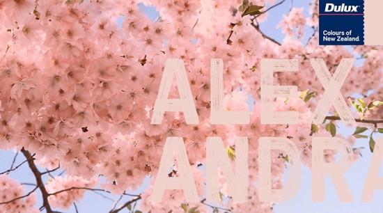 Dulux Header Hero - blossom | branch | blossom, branch, cherry blossom, flower, petal, pink, plant, sky, spring, tree, pink